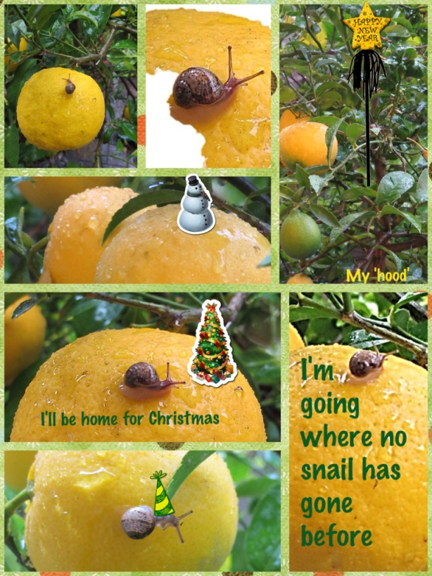 20121223-snail-09