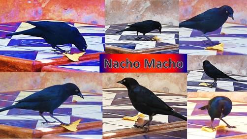 20130918-nacho macho